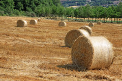Packed roll of hay on a field. Some packed roll of hay in a Tuscany field Stock Image