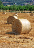 Packed roll of hay on a field. Some packed roll of hay in a Tuscany field Royalty Free Stock Photos