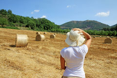Packed roll of hay on a field. Some packed roll of hay in a Tuscany field Royalty Free Stock Photography