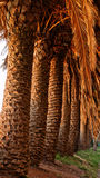 Some Palms. In a perspective view Royalty Free Stock Photo