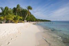 Some palms on the beach. Of island near ocean (Venezuela stock photos