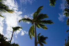 Some palms in the sunshine Stock Image