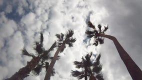 Some palms under the sky. Some palms - under the sky stock video