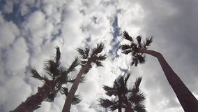 Some palms under the sky. Some palms - under the sky stock footage