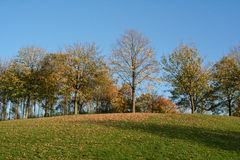 Some Park trees in autumn Stock Image