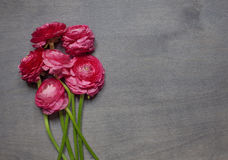 Some peonies on dark wooden background. Top view Royalty Free Stock Photos