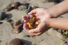 Some pieces of amber found on the Baltic seashore. On hand close up cold sea in background Stock Photos