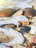 Some pieces of amber found on the Baltic seashore. On hand close up cold sea in background Stock Photography