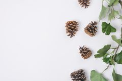 Pine Cones with Branches White Space Horizontal Top View. Some Pine Cones with Branches White Space Horizontal Top View Royalty Free Stock Photos