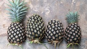 Some pineapple on the floor. Some of freshly picked pineapples in place on the floor stock photography