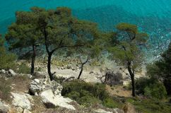 Some pines near the sea. Some pines nea the azure sea, Halkidiki, Greece royalty free stock photo