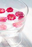 Some pink plum flowers floating in the water Royalty Free Stock Photography