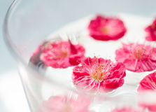 Some pink plum flowers floating in the water. In the sun light stock photography