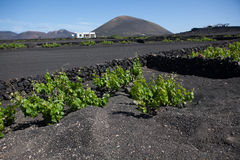 Some place in Lanzarote. The picture belongs to a series of pictures from the holiday island of Lanzarote Royalty Free Stock Photos