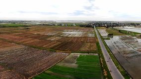 Field after rice harvest season stock photo