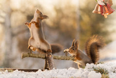 Some play fun. Red squirrel standing on a play tool looking away while another is pushing and bells in corner Stock Image