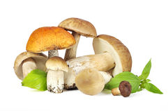 Some  porcini mushrooms Stock Image
