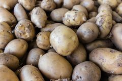 Some potatoes at from local greengrocer. They are raw and looks good Royalty Free Stock Photography