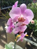 Some Pretty Flowers. A shot of some orchids Royalty Free Stock Images