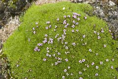 Pretty small flowers blooming in Norway. Some of the pretty small flowers that are beautifully blooming in Norway Stock Image
