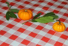 Pumpkins on the cloth. Some pumpkins on the cloth Royalty Free Stock Photography