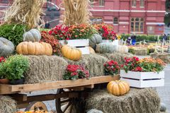 Some pumpkins on hay and ears of wheat in a wooden cart the season of harvest at an autumn festival in Moscow.  stock images