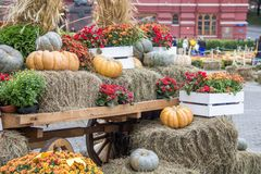 Some pumpkins on hay and ears of wheat in a wooden cart the season of harvest at an autumn festival in Moscow.  royalty free stock images