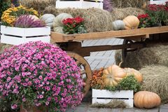 Some pumpkins with hay and flowers on old cart for autumn decoration at market place. Landscape design in the country style for fall season royalty free stock image