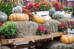 Some pumpkins with hay and flowers on old cart for Fall decoration at market place.  stock photo