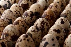 Close-up some quail eggs royalty free stock photos