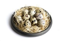 Some quail eggs in a black ceramic bowl. On a white background Stock Image