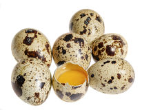 Some quail eggs Stock Images
