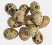 Some quail eggs Stock Image