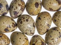 Some quail eggs Stock Photos