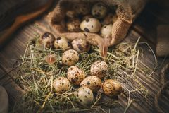 Some quail eggs. With hay on the wooden table background Stock Photography