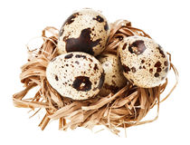 Some quail eggs in the straw nest Royalty Free Stock Photography