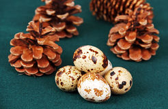 Some quail eggs. Some quail eggs on the table against the background of green forest cones Royalty Free Stock Images