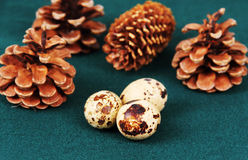 Some quail eggs. Some quail eggs on the table against the background of green forest cones stock photos