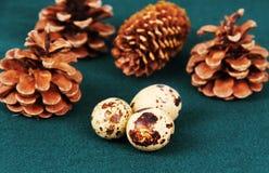 Some quail eggs. Stock Photos