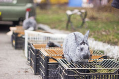 Some rabbits in cage. Some rabbits in and above the cage Stock Photos