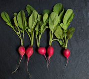 Some radishes on the stone background. Some radishes on the black stone background Royalty Free Stock Images