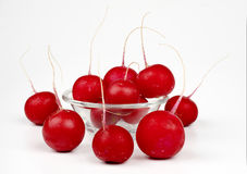 Radishes. Some radishes on the white background Stock Images