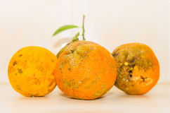 Some Rangpur lime side by side isolated Royalty Free Stock Photography