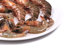 Some raw shrimps. On a white plate stock image