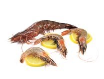 Some raw shrimps with different size. And lemon Stock Image