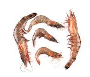 Some raw shrimps with different size. Five raw shrimps with different size. Close up Stock Photos