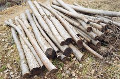 Some raw wooden logs. On the ground Royalty Free Stock Photography