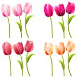 Some realistic tulips on white. Different colors stock illustration