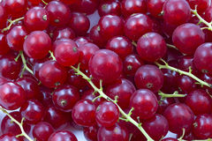 Some red currants. As background Royalty Free Stock Photos