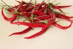 Some red, hot pepper. On clear backgorund Royalty Free Stock Images